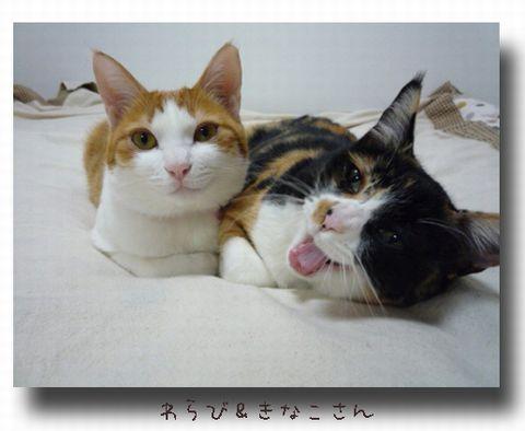 わらび&きなこさん.jpg