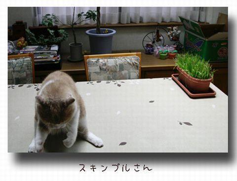 スキンブルさん-力を込めて~.jpg