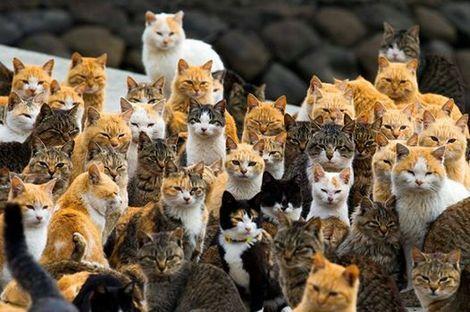 猫の島.jpg